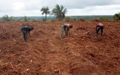 El proyecto agropecuario de Égueire en Costa de Marfil ya está en marcha